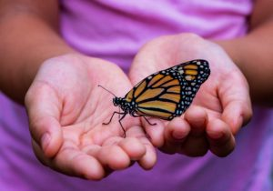 A butterfly represents transformation.
